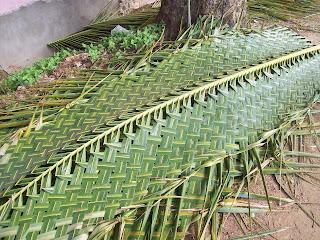 Gardentropics Coconut The Multi Faceted Tree