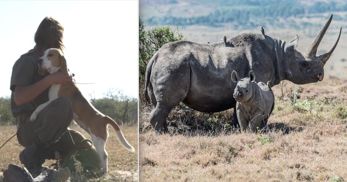 Trained Dog Unit Employed To Protect Wild Animals From Poachers Has Saved 45 Rhinos During Lockdown