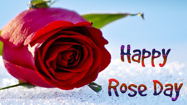 HD-wallpaper-of -rose-day