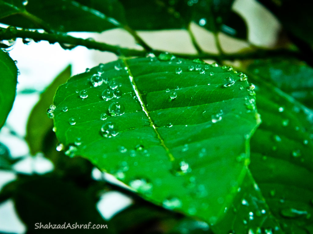 Water droplet like gems on a leaf rode after rain