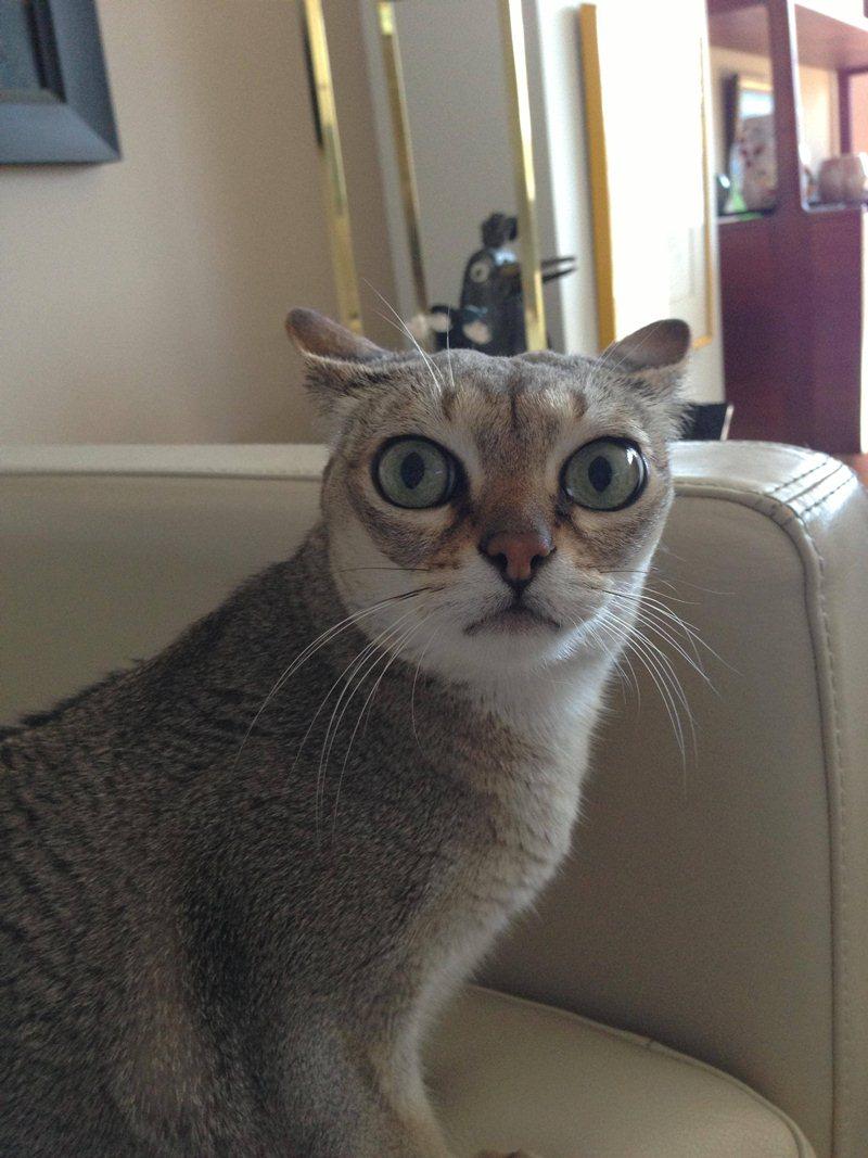 Funny cats - part 21 (42 pics) | Amazing Creatures