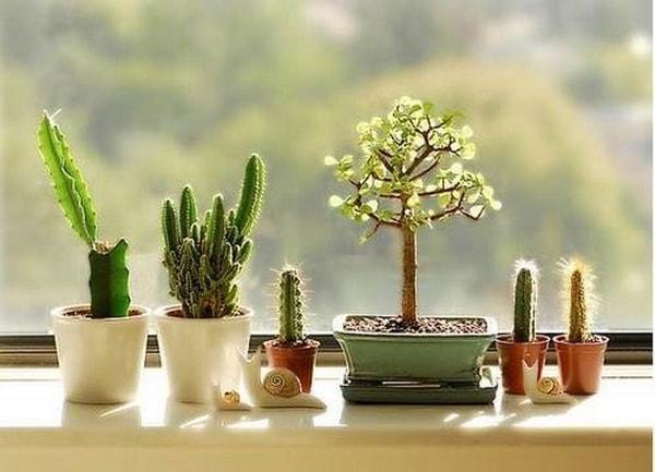 Original Ideas For Decorating Interiors With Cactus 7