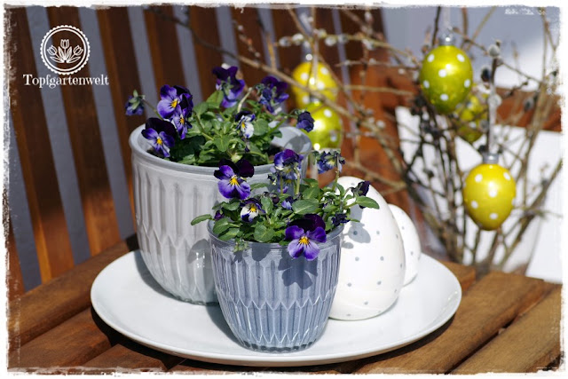Gartenblog Topfgartenwelt Topfgarten + DIY mit Knagglig (Kiste) und Töpfen viel Platz auf kleinem Raum schaffen - Blumendeko mit Hornveilchen und Bellis passend für den Frühling und Ostern: Arrangement aus Hornveilchen und kleinen Töpfen