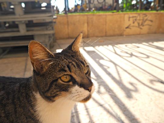 sitges cat