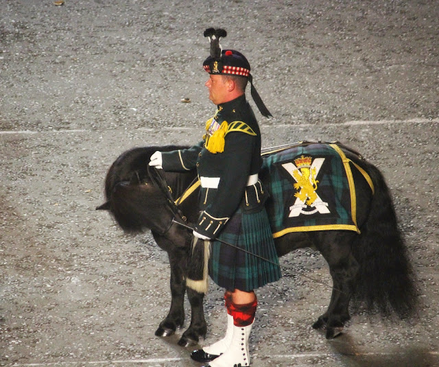Edinburgh Tattoo Shetland Pony
