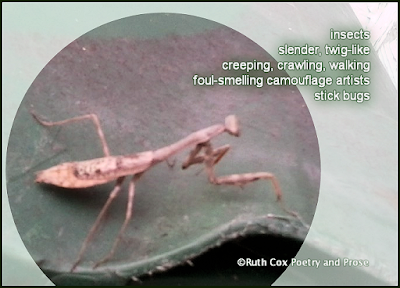 Walking Sticks Cinquain Ruth Cox Poetry and Prose
