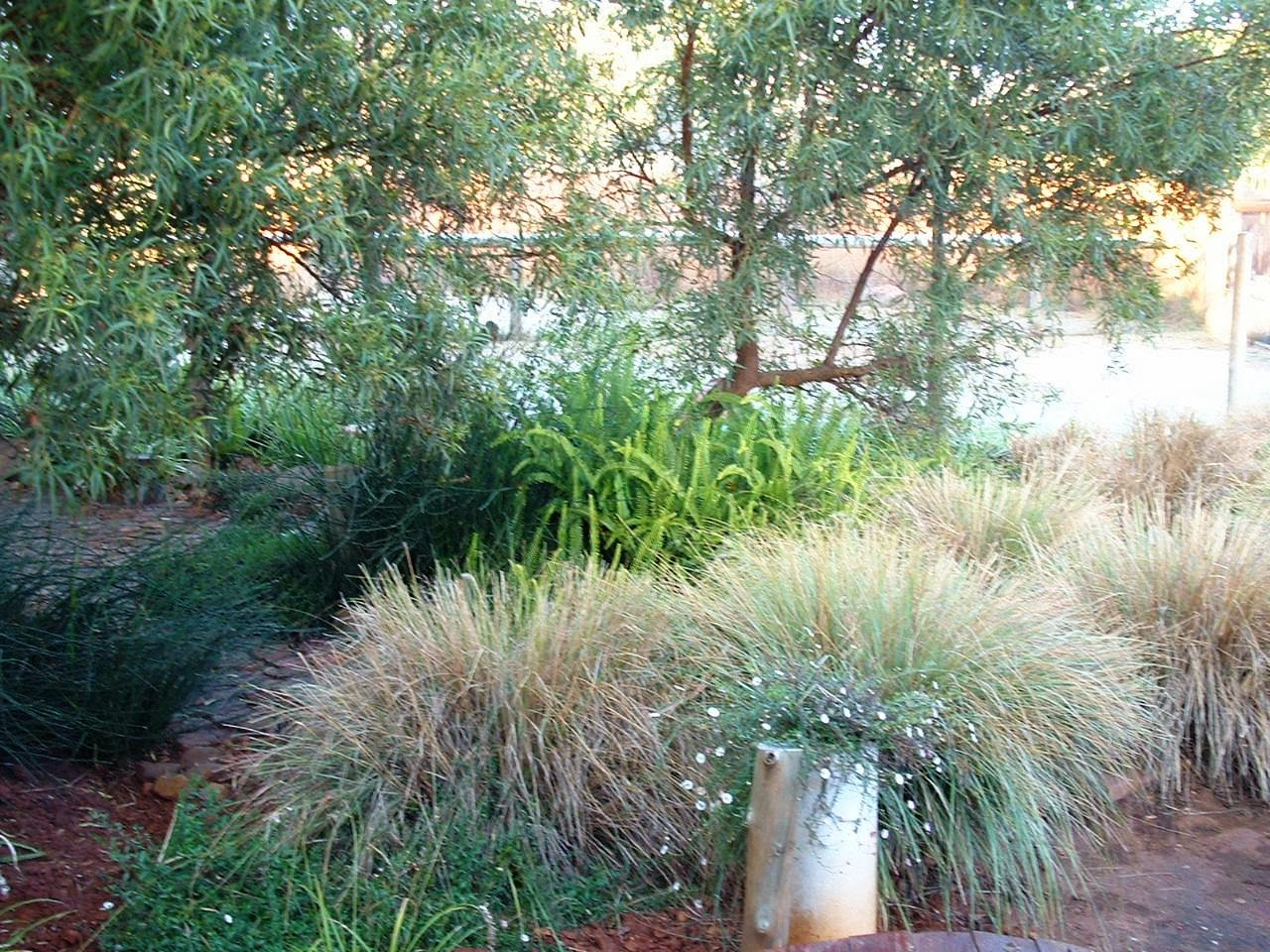 Gardening in africa ornamental grasses in the garden for Tall grass garden