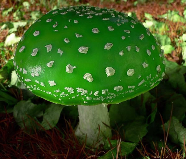 El blog de acebedo setas y hongos curiosidades for Setas jardin