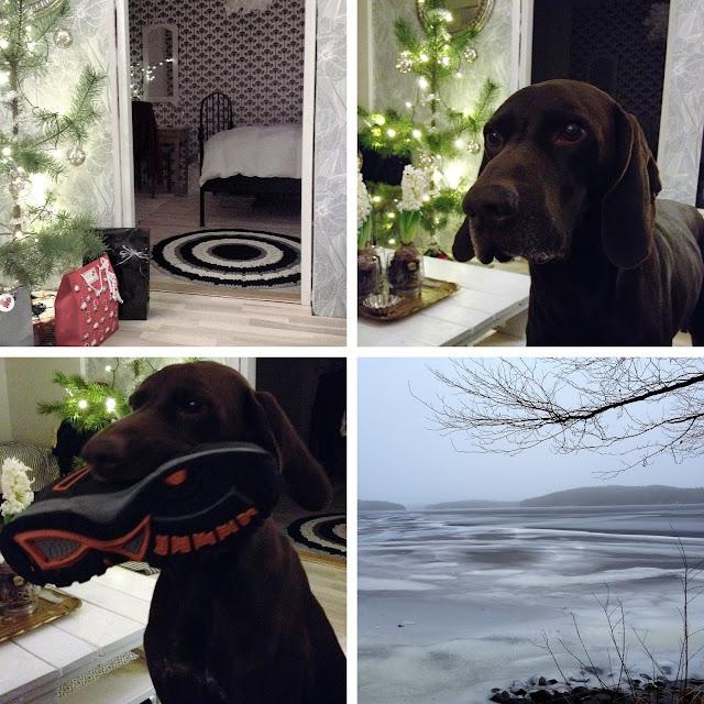 joulupuu, joululahja, koira