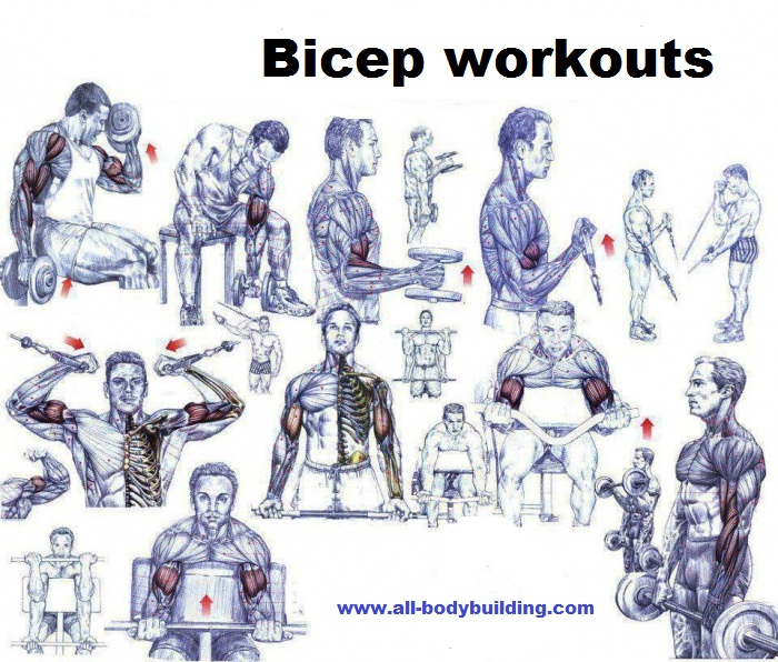 Top 10 Bicep Workout And Bicep Exercise Mistakes - all ...