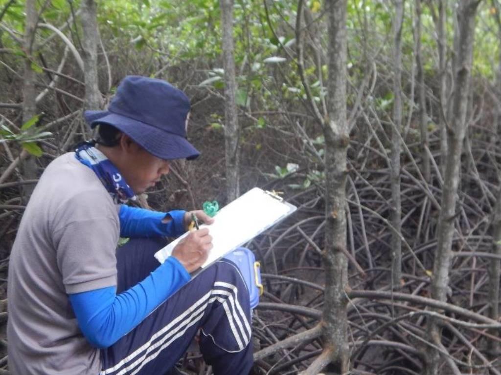 Garap MECoK Ecopark, IKAMaT Kembangkan Ekowisata Mangrove Pertama di Jepara