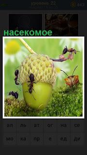 насекомое ползает по желудю, который  валяется на траве