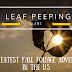 Leaf Peeping Alert! The Greatest Fall Foliage Adventure in the U.S.
