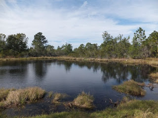pond at Wickham park