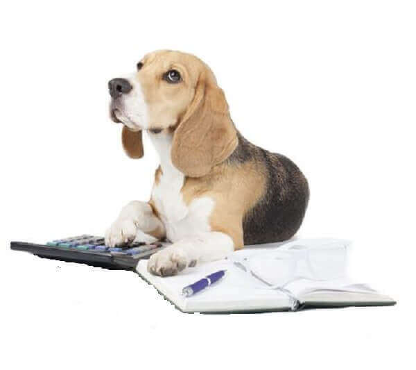 pet insurance dogs