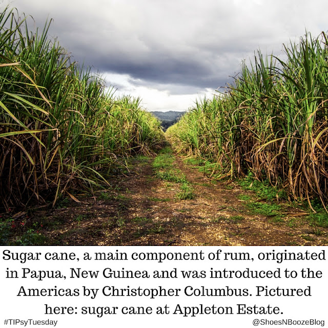 Sugar Cane at Appleton Estate for TIPsyTuesday on Shoes N Booze