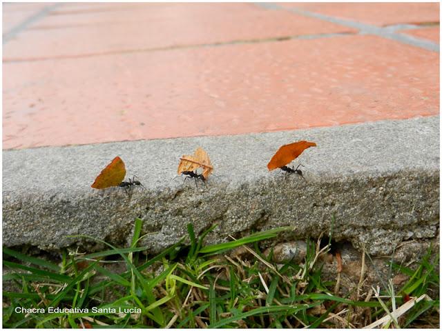 ¿Qué llevan las hormigas? - Chacra Educativa Santa Lucía