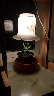 Hjemmelavet vækstlys med LED pære
