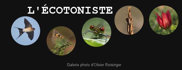 http://ecotoniste.piwigo.com/