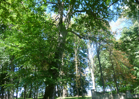 Вишневецкий дворец. Парк