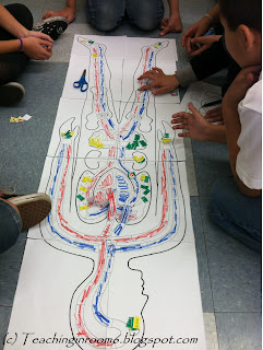 learning about circulation