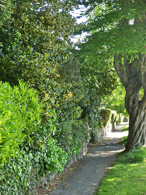 Shady path, Cornwall