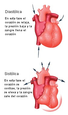 BodyBuilder: Flujo sanguíneo y presión arterial