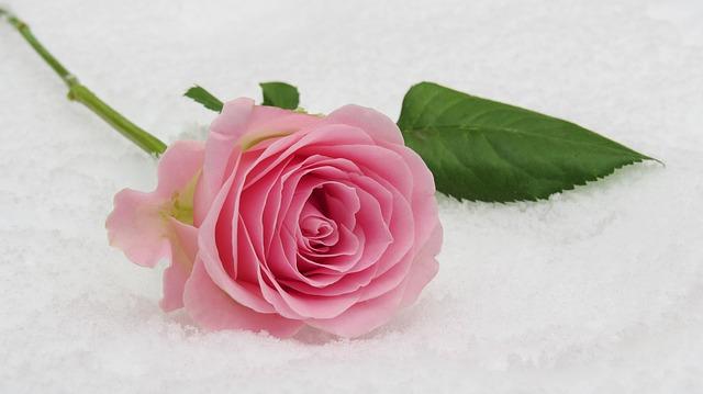 hoa đẹp nhất thế giới 17