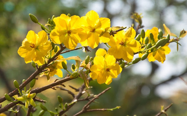 Ornamental plants - indispensable part of Tet 3