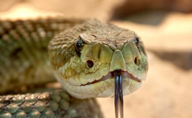 Zoológico, reptiles, animales