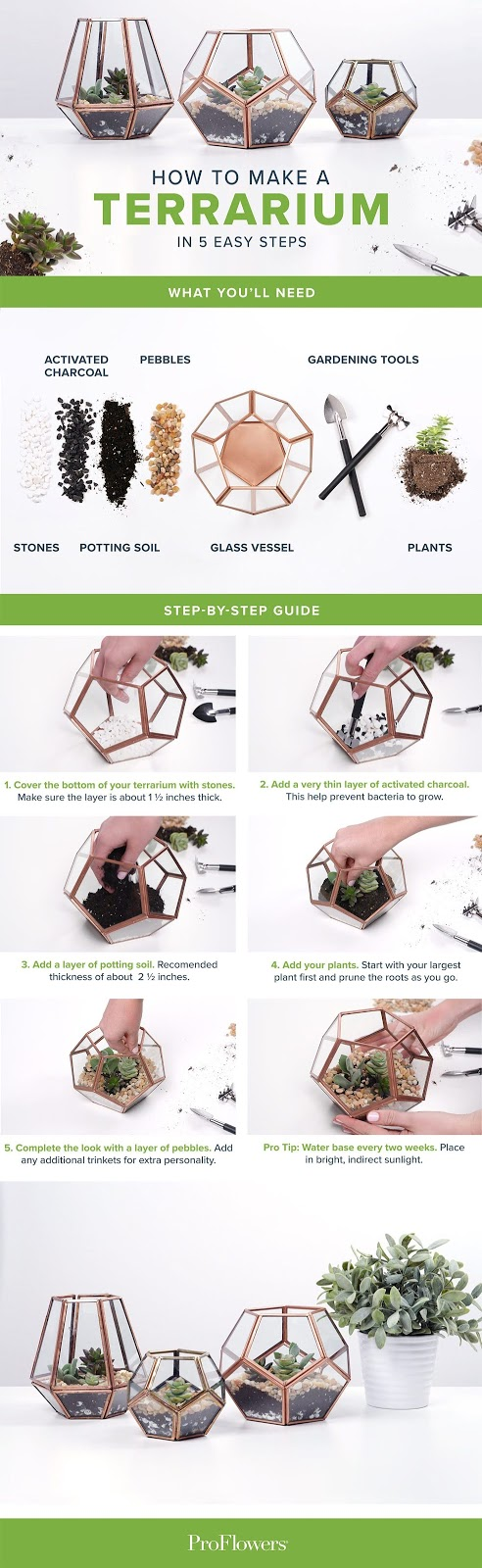 5 Best Steps How to Make a Terrarium for Beginners You Need to Know