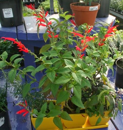The flower bin growing fresh herbs indoors - Herbs that can be grown indoors ...