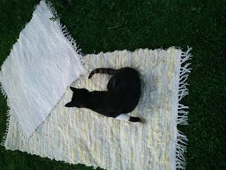 tapete de tecelagem manual com lã de ovelha e algodão com gato em cima do tapete