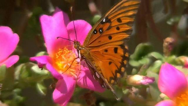 Pretty Pictures Of Flowers And Butterflies