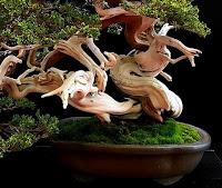 torsiones y crecimiento en espiral en bonsai