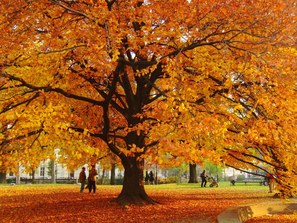Vienna autumn images wallpaper