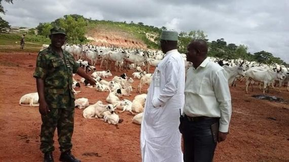 Cattle Rustling: Air Force recovers '665 Cows & 141 Sheep/Rams'