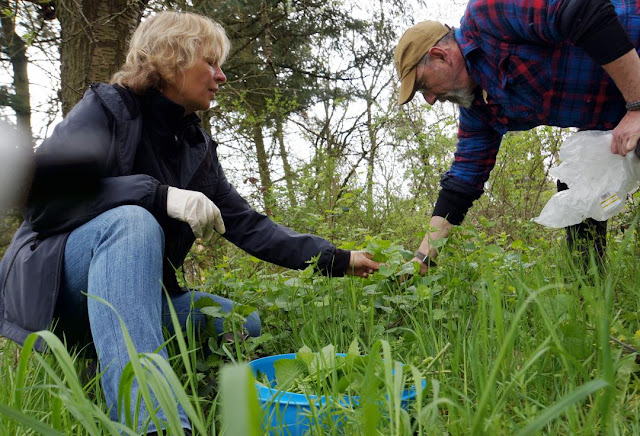 Outdoor-Kochkurs Wildkräuter sammeln