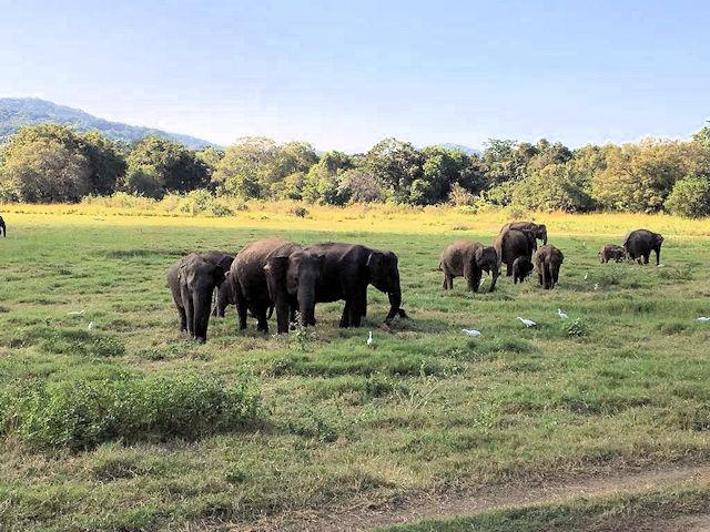 Safari Sri Lanka - Wilde Elefanten (C) Kundenfoto