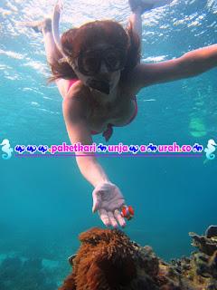 snorkeling seksi di karimunjawa