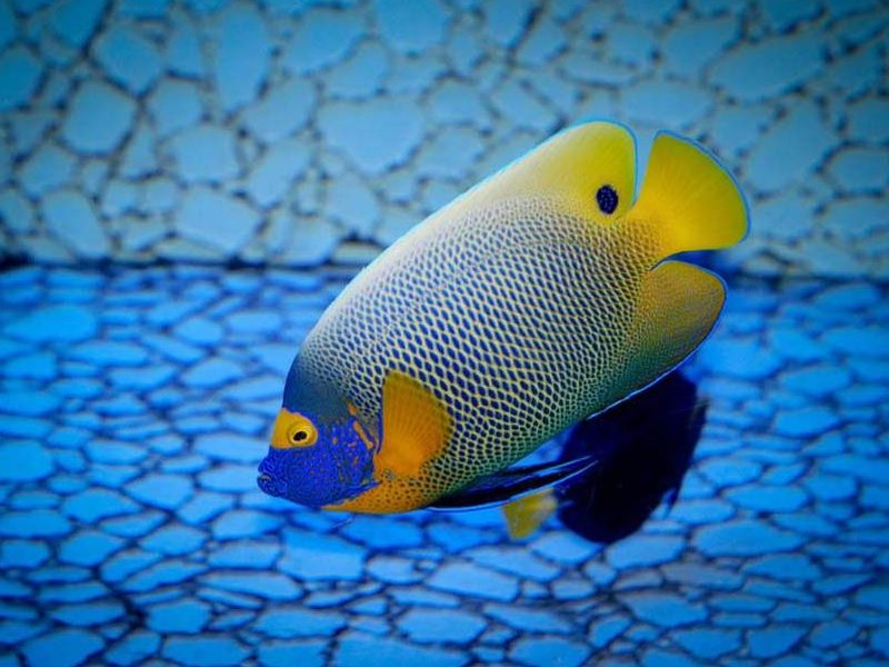 Animals In Ocean Biome