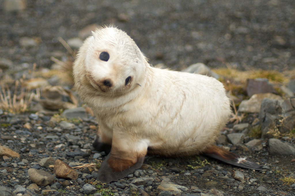 Funny Lovely Baby Seals New Pictures And Wallpapers 2012 ...