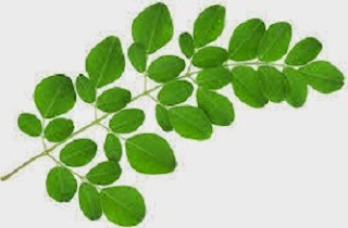 cara memasak daun kelor yang benar,daun kelor penangkal ilmu hitam,cara mengolah daun kelor untuk diabetes,cara mengolah daun kelor untuk kanker,cara membuat jus daun kelor,