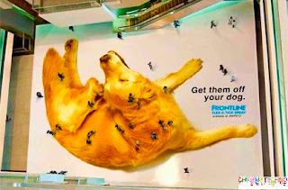 Guerilla Marketing  - Flea Control Campaign