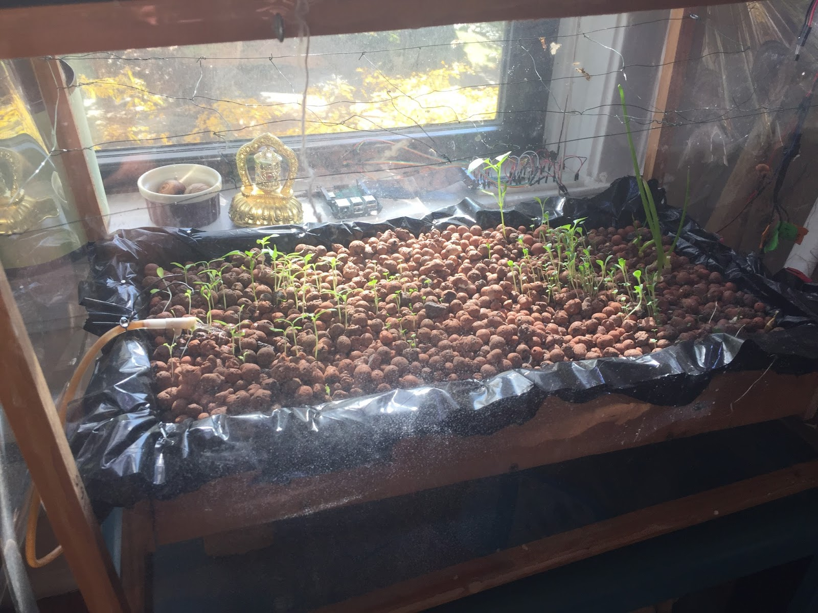 Raspberry Pi Powered Hydroponics