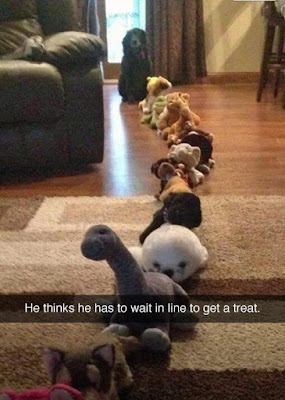 Funny Dog queue animal snapchat joke picture