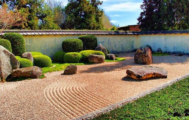 Самшит в саду камней