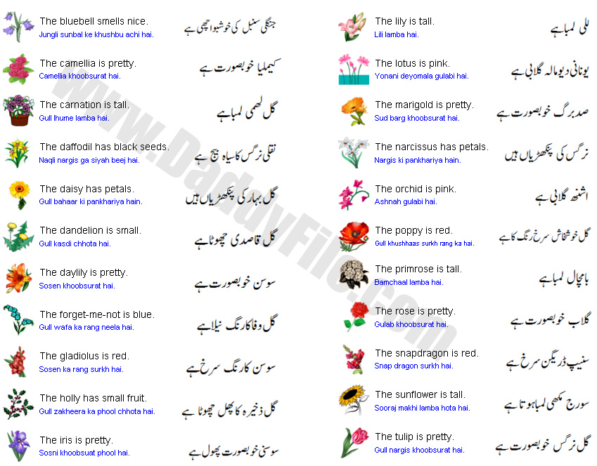 Flower Names In Urdu And English With Pictures on Gardening Vocabulary Words