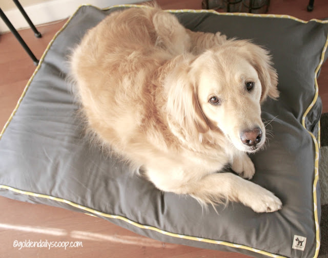 molly mutt large dog bed for golden retriever