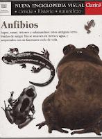 anfibios tapa